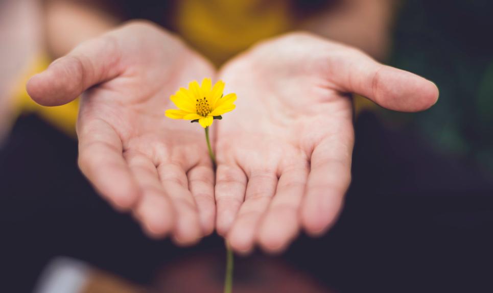 yellow flower in hands
