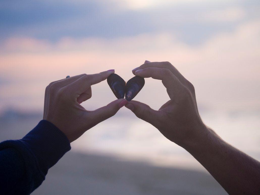 two shells make a heart