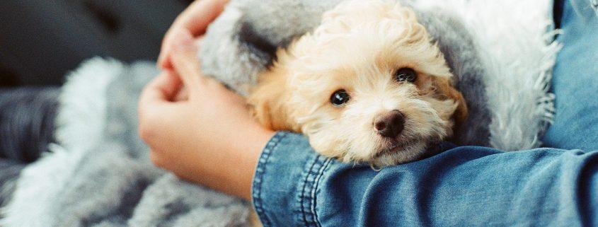 animal care trust dog in lap