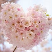 flower-pink-mothers-day
