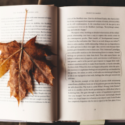 leaf on top of book