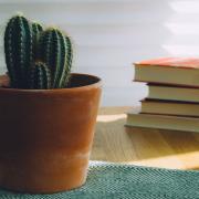books with cactus
